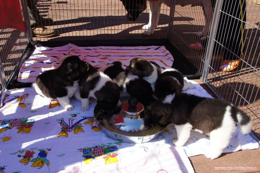 Puppies D-Litter