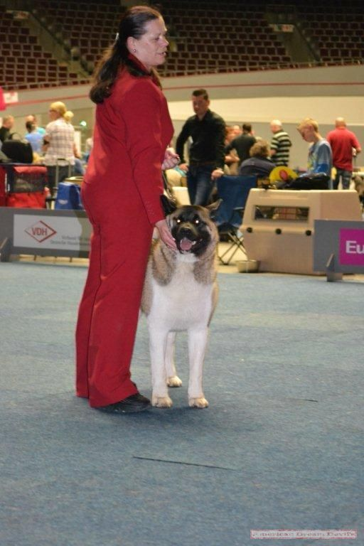 Europe Winner Breed Show Dortmund 11-13.05.2012